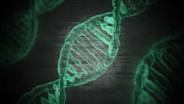 ep adn genes genetica 20171129180328