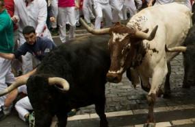cbalcista sh bull11