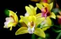 ep orquideasreal jardin botanicomadrid