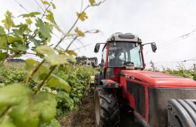 ep un trabajador montado en un tractor trabaja en los vinedos