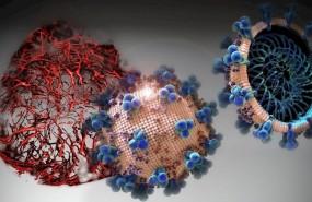 ep en los cultivos celulares analizados en el presente estudio el hrsace2 inhibio la carga de